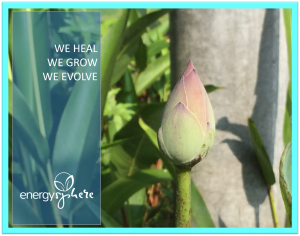 we heal